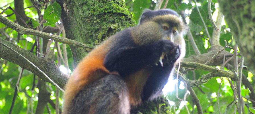 5 Days Gorilla Tracking Safari