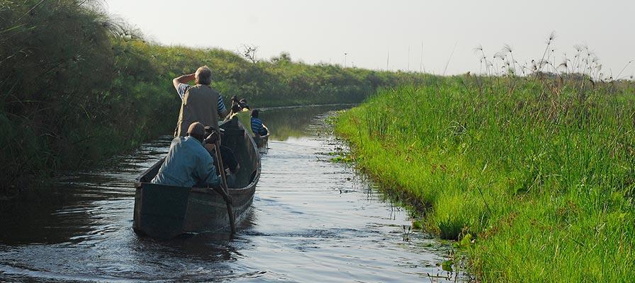 Mabamba Birding - Mabamba Bay Wetland Uganda Birding Tour Safari