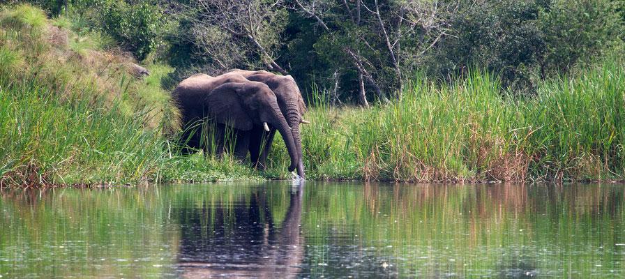 Murchison Falls Big 5 Safari and Jinja Source of the Nile