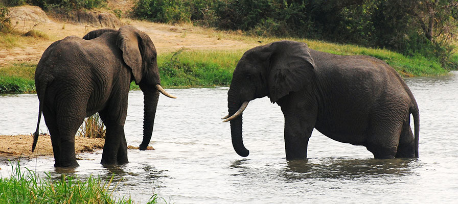 Safari in Queen Elizabeth & Kidepo National Parks