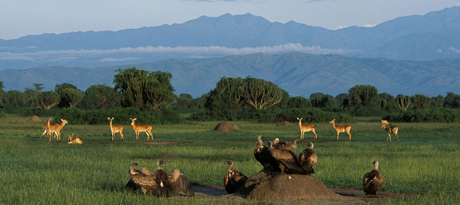 Safari in Queen Elizabeth & Kidepo National Parks