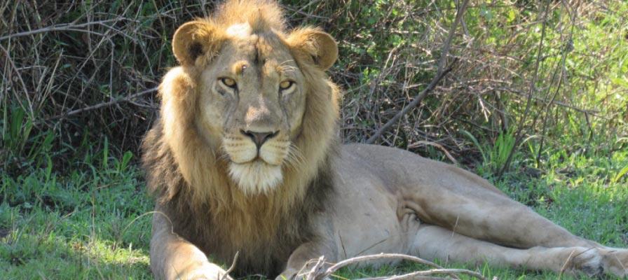 Uganda Rwanda Safari Adventure -