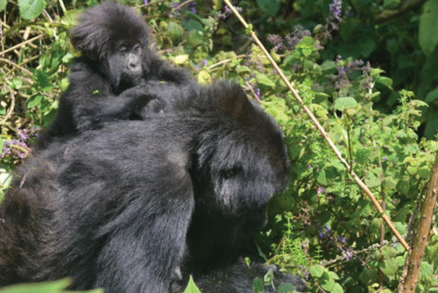 Mahirwe and her infant