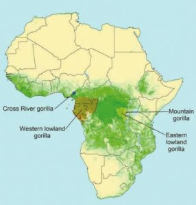 The Eastern Lowland gorillas Map