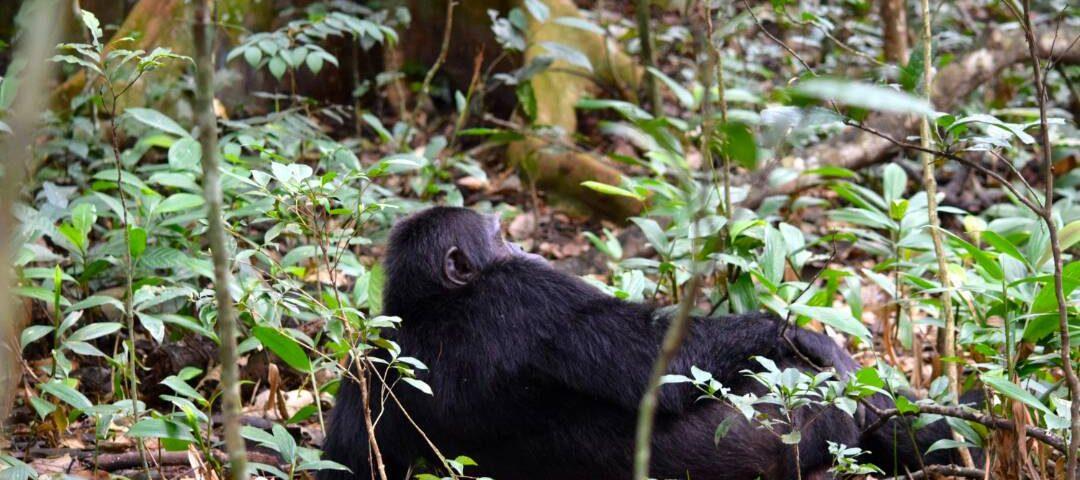 18 Day Gorillas and Wildlife Safari