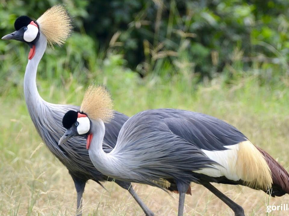 Bird Watching In Uganda