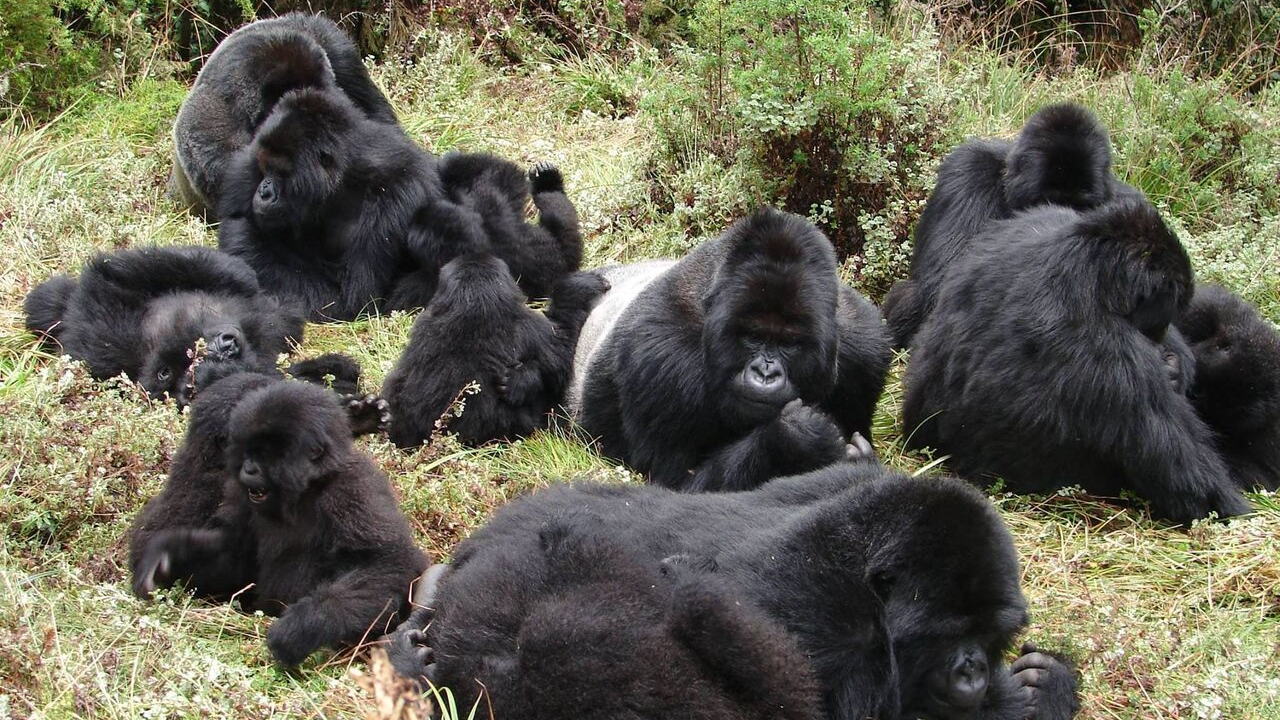 Best Time to Book the Gorilla Trekking Permits