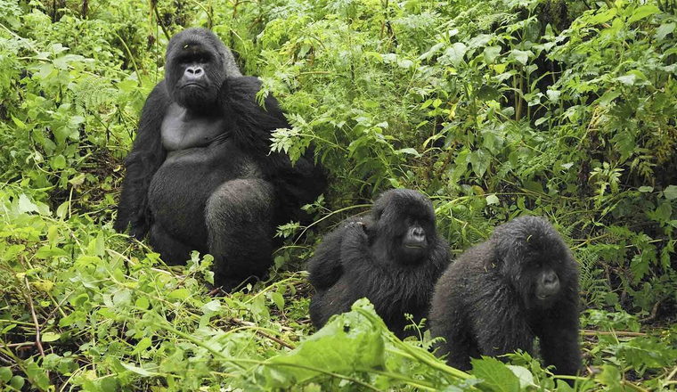 Best Group Tours & Holiday Packages in Uganda and Rwanda