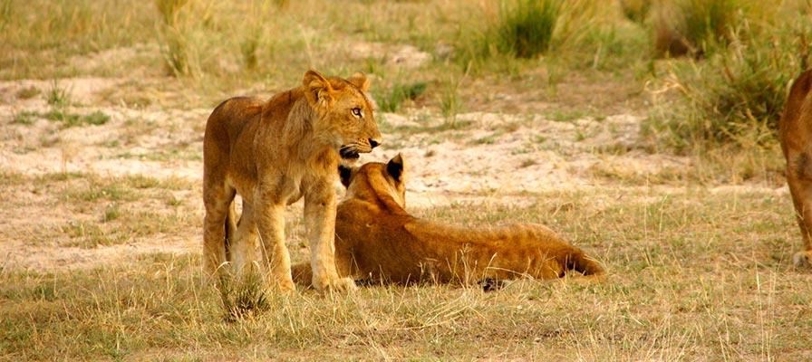 Queen elizabeth game drive safari