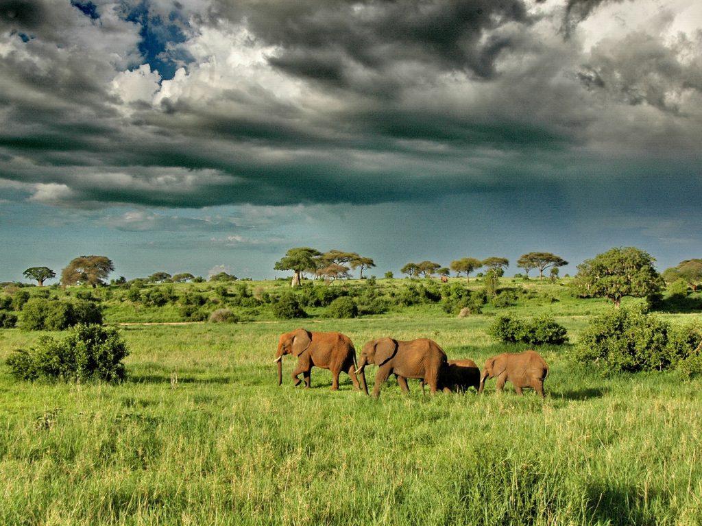 Uganda Experiential Safari