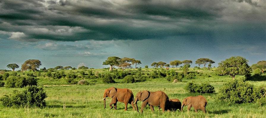 Uganda Experiential Safaris