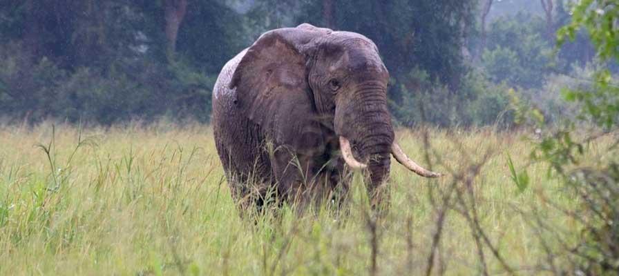 Grand Uganda Safari
