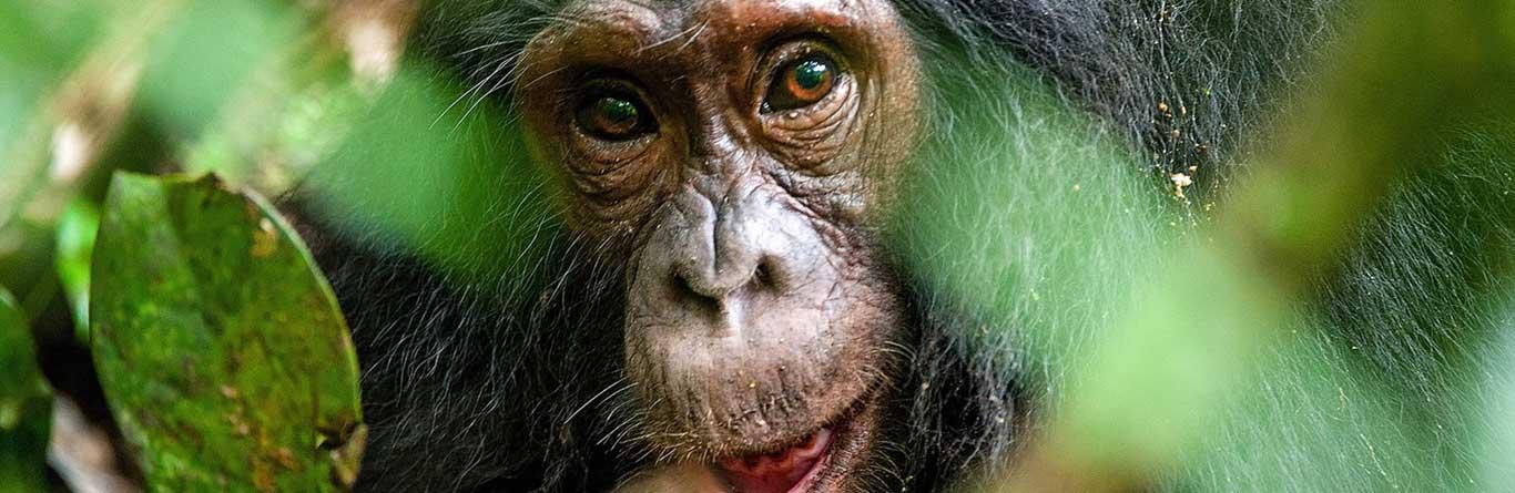 Rwanda Tours And Safaris