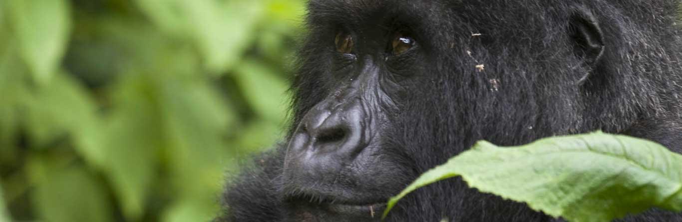 Uganda Tours And Safaris