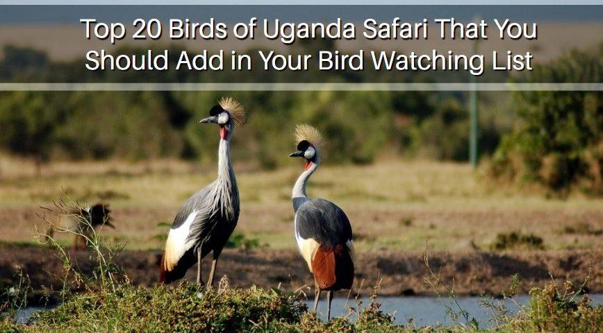 Bird Watching List in Uganda