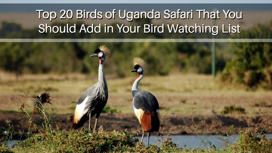 Bird Watching List in Uganda