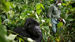 Corona virus in Uganda