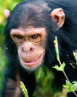 Best of Rwanda Safari