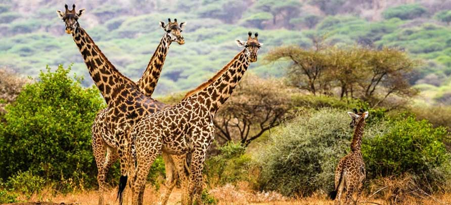 4 Days Safari In Northern Tanzania
