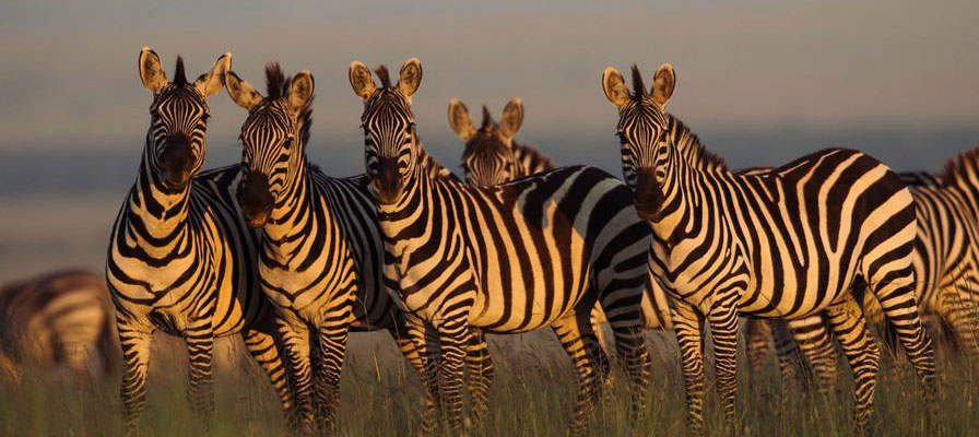 3 Days Best Of Maasai Mara Budget Safari
