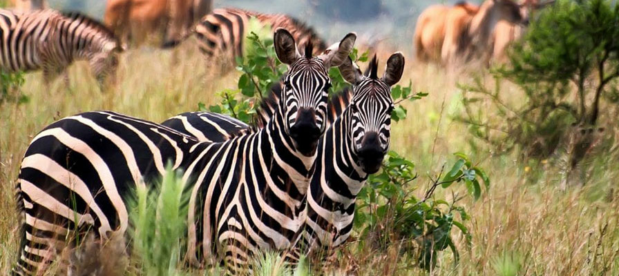 4 Days 3 Night Northern Tanzania Safari