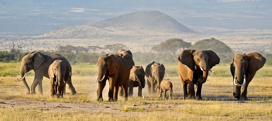 4 Days Maasai Mara Budget Safari