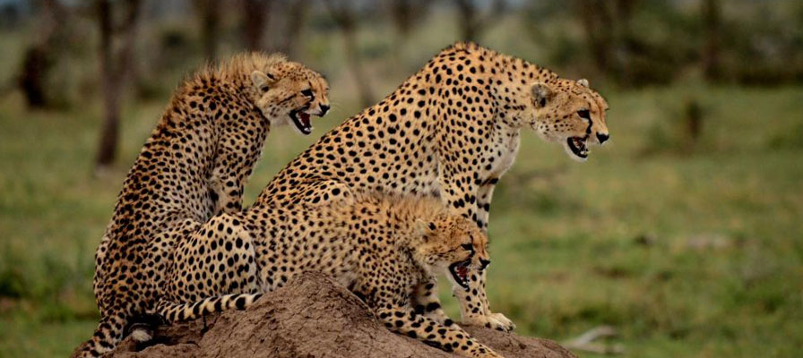 5 Days 4 Night Northern Tanzania Safari