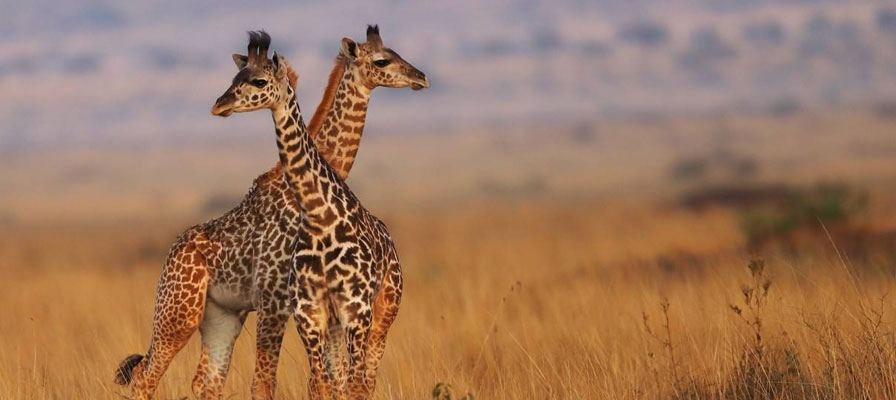 5 Days Affordable Safari
