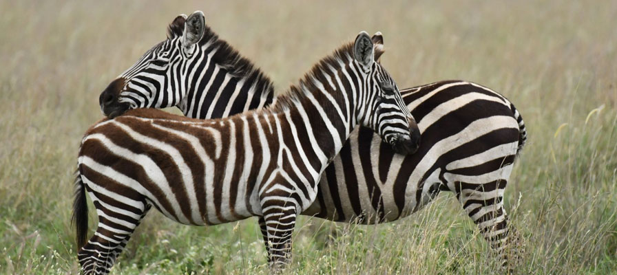 5 Days Safari In Northern Tanzania