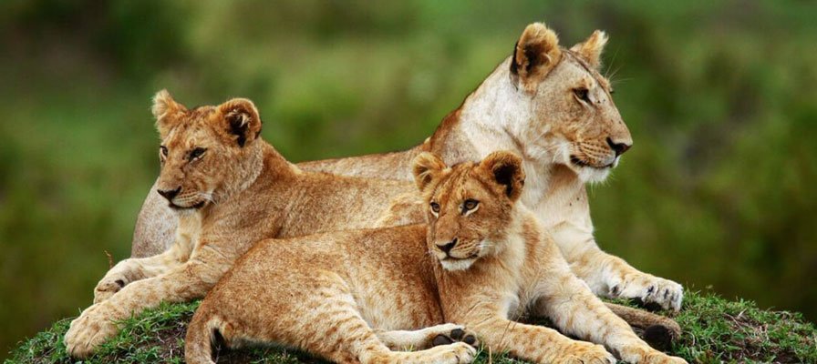 6 Days Maasai Mara Private Luxury Safari