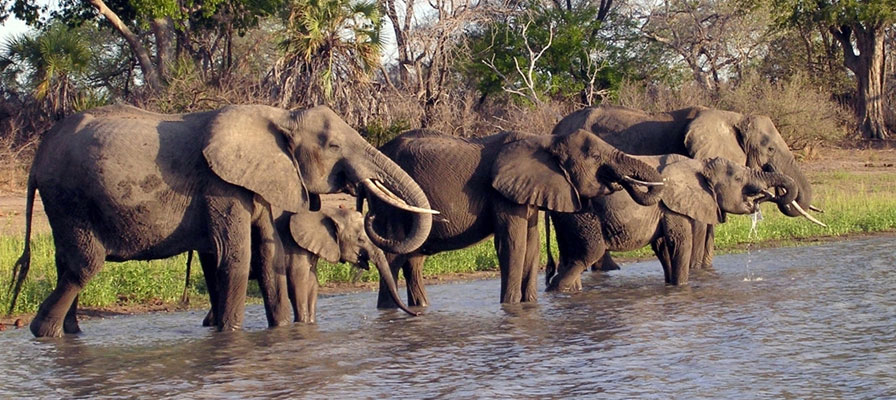 6 Days Safari In Northern Tanzania