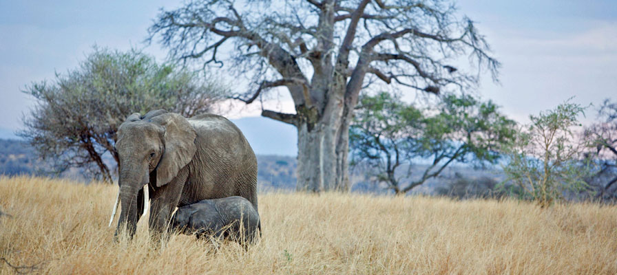 7 Days 6 Night Northern Tanzania Safari