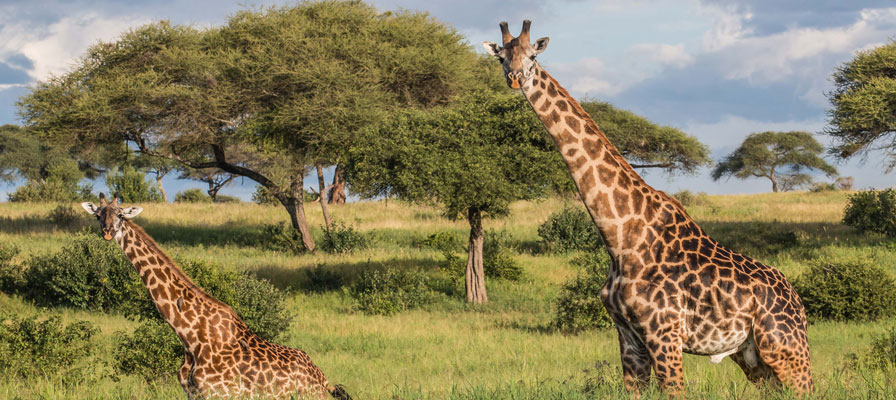 7 Days Safari In Northern Tanzania
