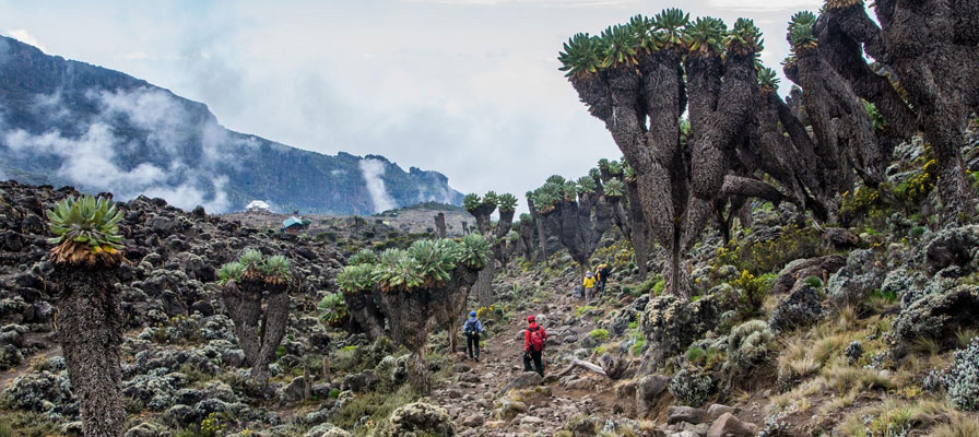 8 Days Machame Route