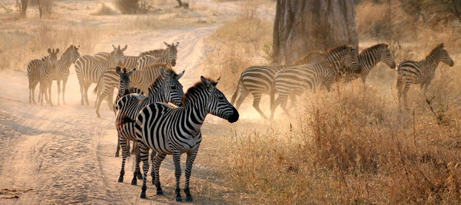 Arusha National Park 1 Day Excursion