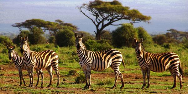Northern tanzania Safari
