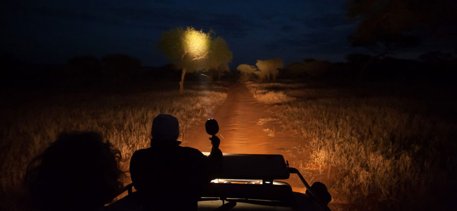 Tanzania Night Game Drive