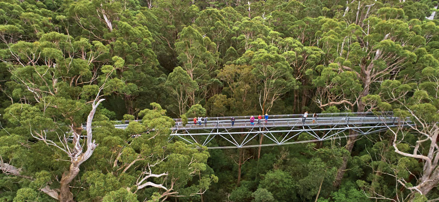 Tanzania Tree Topwalk