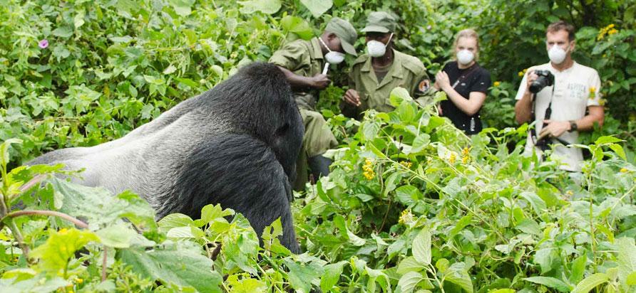Congo Gorilla Trekking